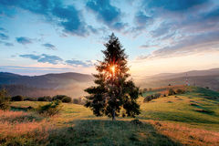 Salida del sol mágica con el árbol imágenes de archivo libres de regalías