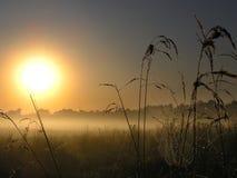 Salida del sol mágica con un Web de araña fotos de archivo libres de regalías