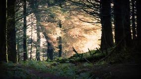 Salida del sol mágica en el bosque