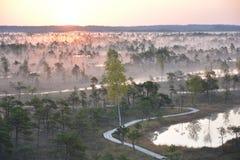 Salida del sol mágica en el pantano Kemeri Letonia fotografía de archivo libre de regalías
