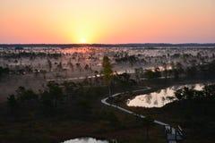 Salida del sol mágica en el pantano Kemeri Letonia foto de archivo