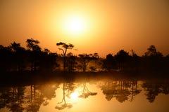 Salida del sol mágica en el pantano Kemeri Letonia Fotografía de archivo