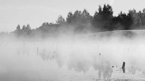 Salida del sol mística con las voces de cuervos y de la niebla en el pantano almacen de metraje de vídeo