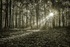 Salida del sol mística de la mañana Fotos de archivo libres de regalías