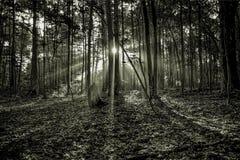 Salida del sol mística de la mañana Imagen de archivo libre de regalías