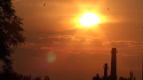 Salida del sol, mañana, pájaros