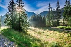 Salida del sol maravillosa en el valle Chocholowska, montañas de Tatra en verano Foto de archivo