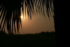 Salida del sol Mirada del sol a través de las hojas de palmeras imagen de archivo