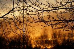 Salida del sol mostrada entre los árboles foto de archivo