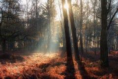 Salida del sol muerta del helecho Fotos de archivo libres de regalías
