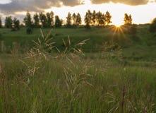 Salida del sol del paisaje del verano, hierba de prado en la luz Paisaje natural del verano foto de archivo