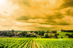Salida del sol-paisajes del viñedo Fotos de archivo