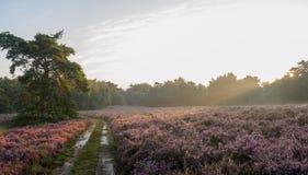 Salida del sol panorámica sobre tierra holandesa Foto de archivo