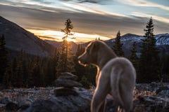 Salida del sol del perrito Fotos de archivo libres de regalías