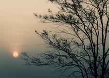 Salida del sol por mañana con la silueta del árbol Imagen de archivo