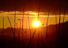 Salida del sol que ciega Fotografía de archivo libre de regalías