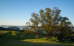 Salida del sol Ring Mountain - árbol Imagen de archivo libre de regalías