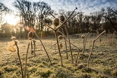 Salida del sol del rocío de la mañana Imagenes de archivo
