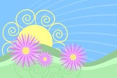 Salida del sol rosada de la margarita Imagen de archivo libre de regalías