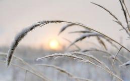Salida del sol rosada del invierno Imagen de archivo libre de regalías