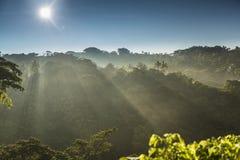 Salida del sol selva vanuatu Fotografía de archivo libre de regalías