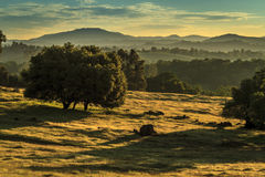 Salida del sol sobre árboles, colinas y montañas Imagen de archivo libre de regalías