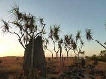 Salida del sol sobre Ant Hills Imágenes de archivo libres de regalías