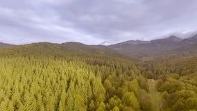 Salida del sol sobre bosque del otoño almacen de metraje de vídeo