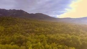 Salida del sol sobre bosque del otoño almacen de video