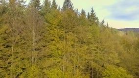 Salida del sol sobre bosque del otoño metrajes
