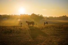 Salida del sol sobre caballos Foto de archivo libre de regalías