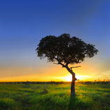 Salida del sol sobre campo verde Imágenes de archivo libres de regalías