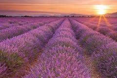 Salida del sol sobre campos de la lavanda en la Provence, Francia imagen de archivo libre de regalías