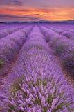 Salida del sol sobre campos de la lavanda en la Provence, Francia imagenes de archivo