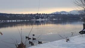 Salida del sol sobre Columbia con los gansos Imágenes de archivo libres de regalías