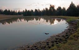 Salida del sol sobre el agujero de agua del caballo salvaje en el amanecer en la gama del caballo salvaje de las montañas de Pryo Foto de archivo libre de regalías