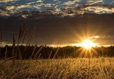 Salida del sol sobre el bosque Fotografía de archivo