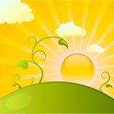 Salida del sol sobre el campo de plantas Foto de archivo