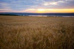 Salida del sol sobre el campo de trigo imagenes de archivo