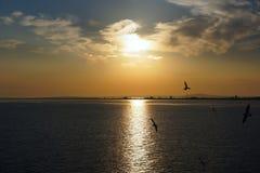 Salida del sol sobre el estrecho, gaviota sobre el mar Imágenes de archivo libres de regalías