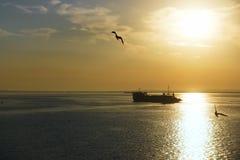 Salida del sol sobre el estrecho, la gabarra y la gaviota Imagen de archivo libre de regalías