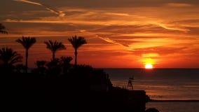 Salida del sol sobre el mar Siluetas de palmas en la costa metrajes