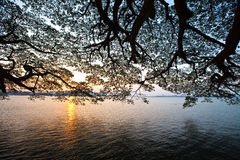 Salida del sol sobre el puerto de Kochi, Kerala Fotos de archivo libres de regalías