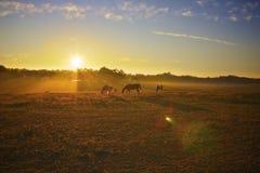 Salida del sol sobre la granja de Kentucky Fotos de archivo libres de regalías