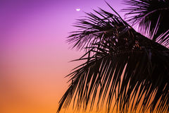 Salida del sol sobre la palmera Imagen de archivo libre de regalías