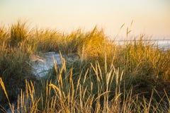 Salida del sol sobre la península de Darss, Alemania Imagen de archivo libre de regalías
