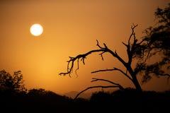 Salida del sol sobre la sabana con los árboles en primero plano foto de archivo