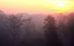 Salida del sol sobre las maderas. Fotos de archivo