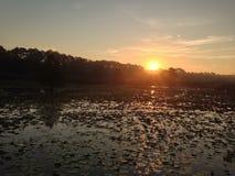 Salida del sol sobre Lily Covered Lake Iamonia Fotografía de archivo