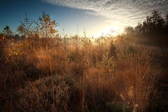 Salida del sol sobre pantano durante mañana brumosa del otoño Imagen de archivo libre de regalías
